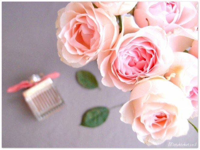 בשמים, קלואה, קלואה, קלואי, chloe, בושם, דיוטי פרי, ורדים